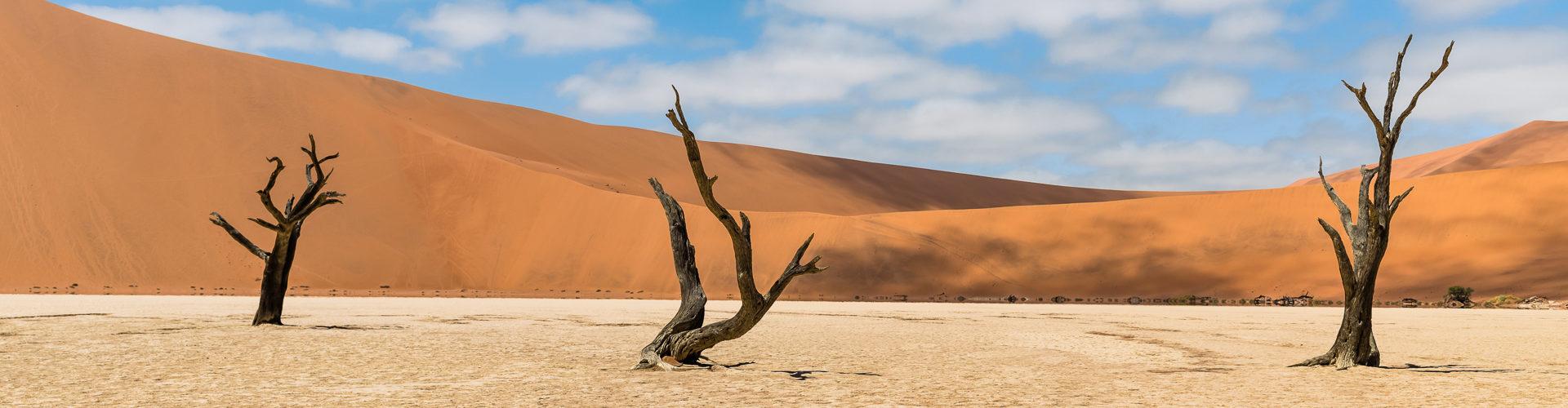 Le Dead Vlei (Namibie)