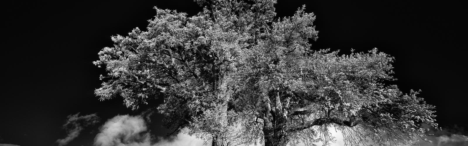 les deux frères – photos infrarouges