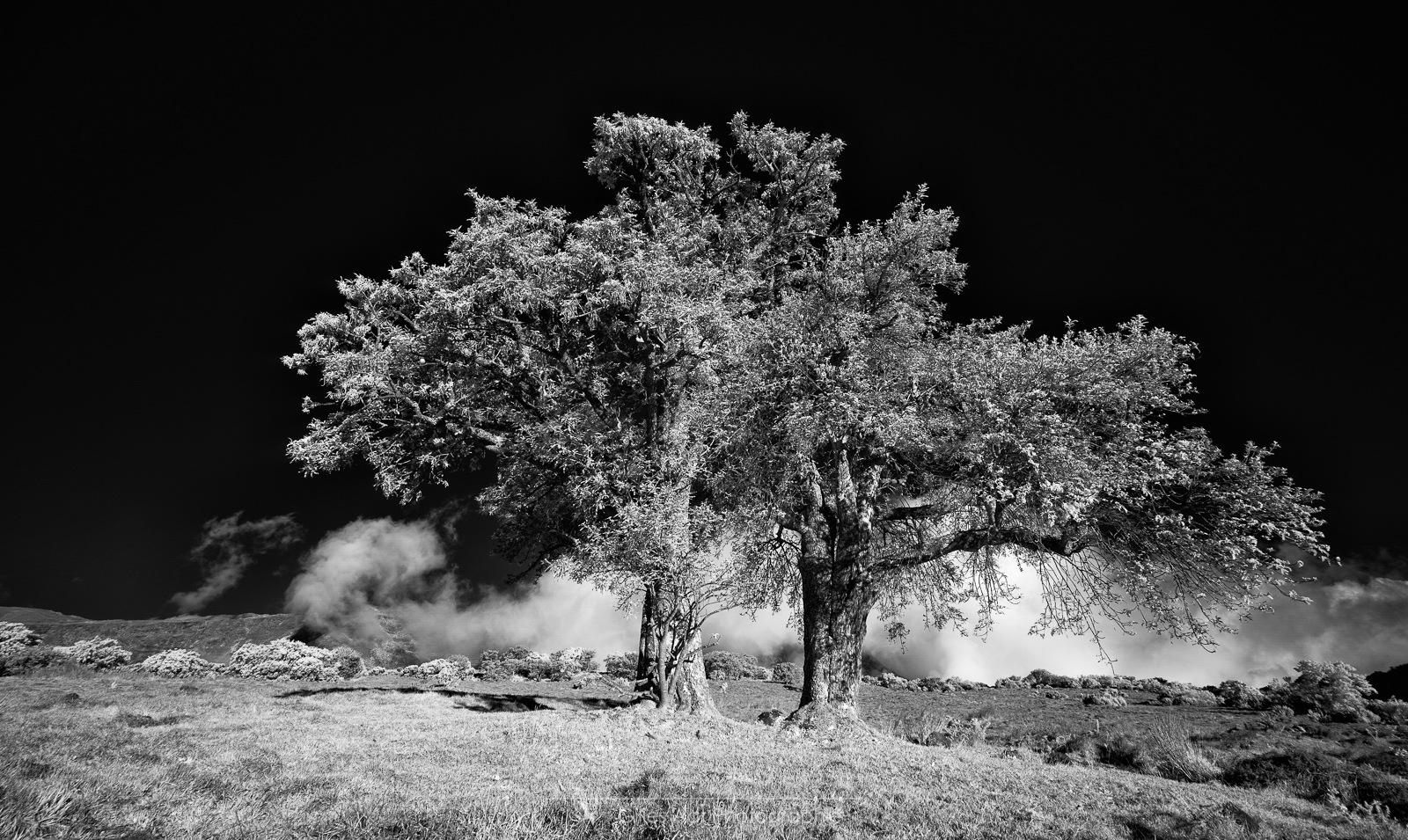 les 2 frères - arbres en infrarouge