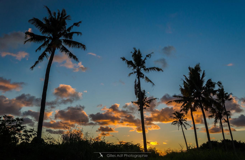 Les palmiers au lever du jour