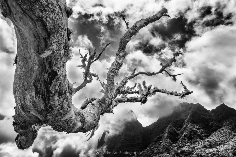 un arbre vers le ciel