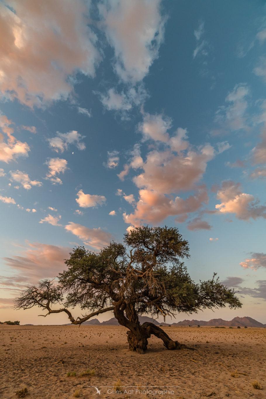 Arbre du Namib