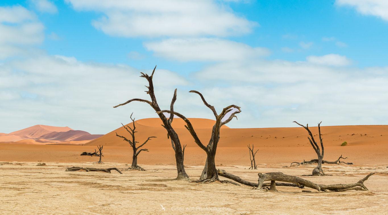 Barrières de dunes