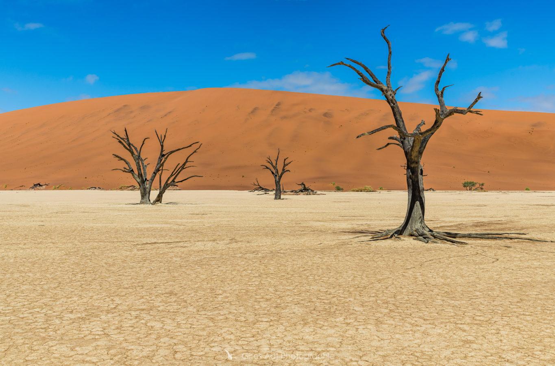 Acacias, argile et dunes