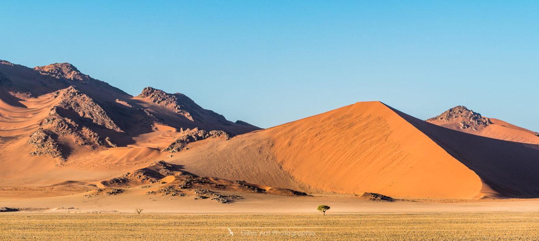 L'arbre et la dune