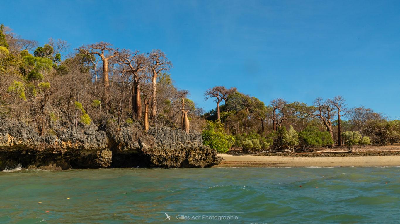 Baobabs de Moramba