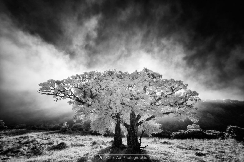 l'Âme d'un arbre