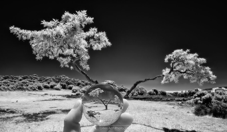 le Tamarin et la boule de cristal...