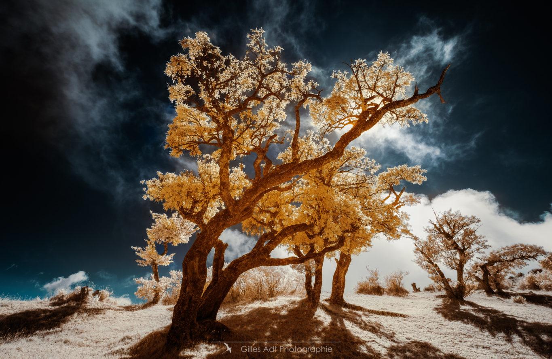 l'Ame colorée des arbres
