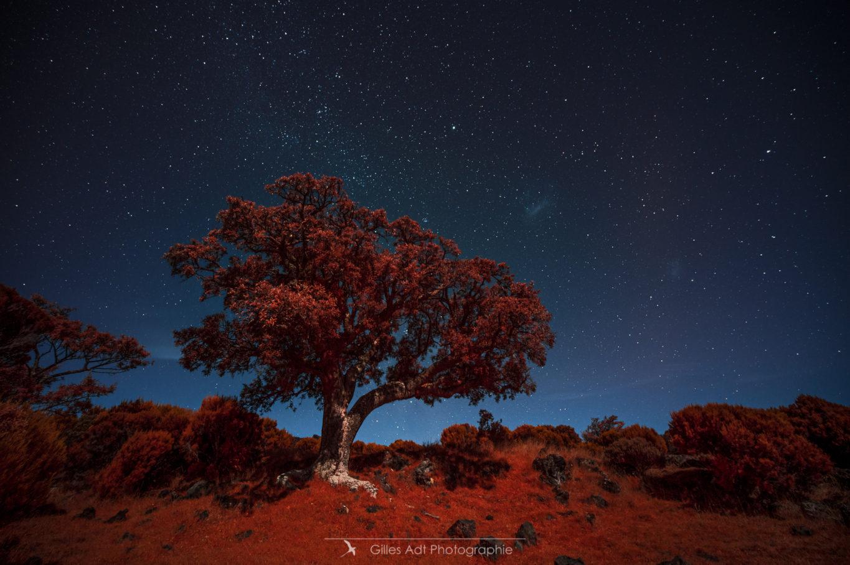 l'Arbre rouge - Nocturne