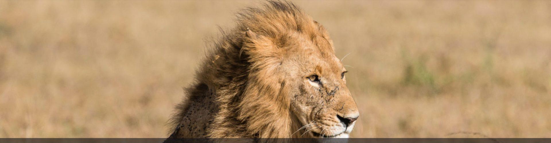La galerie Lion